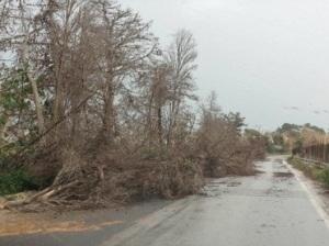 forte vento in toscana ultime notizie meteo