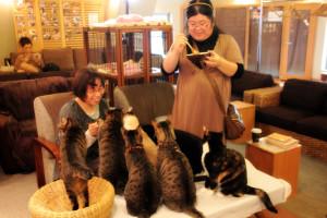 Crazy cat cafe apre a milano