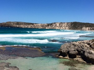 isola dei canguri kangaroo island australia costa