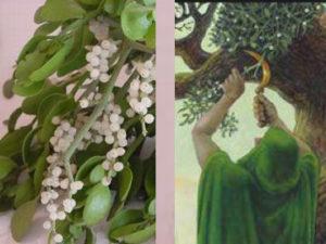 vischio-pianta-sacra-ai-druidi-il-rito-magico-del-solstizio-d-inverno