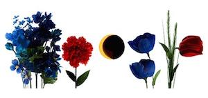doodle google primo giorno di primavera e eclissi di sole 2015