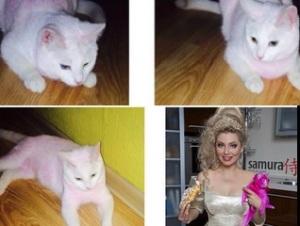 la modella russa tinge il suo gatto di rosa polemica sul web